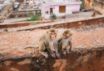 Monkeys sitting on rooftop
